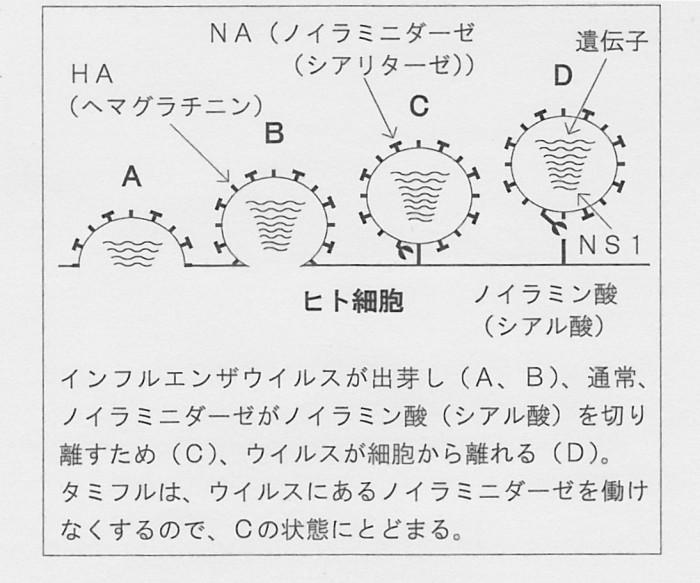 ウイルス構造
