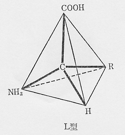 SCN_0092 アミノ酸立体図