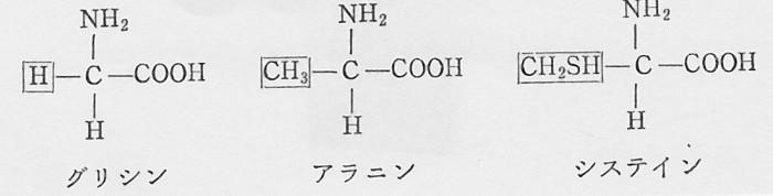 SCN_0093 アミノ酸 R