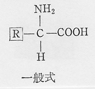 SCN_0091 アミノ酸一般式